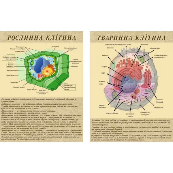 """Комплект стендов по биологии """"Строение клетки"""""""
